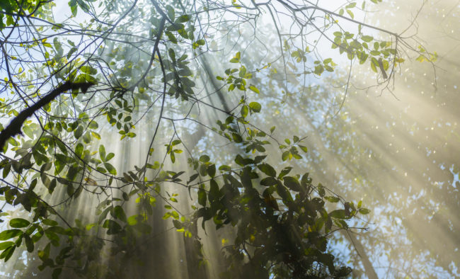 Tree with Ray of Light
