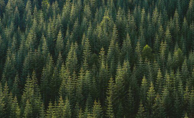 Paysage Forêt Finance