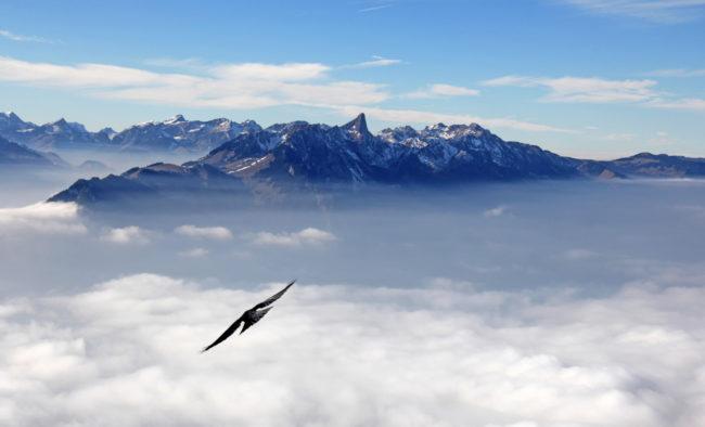 alpenkette vom niederhorn, schweiz