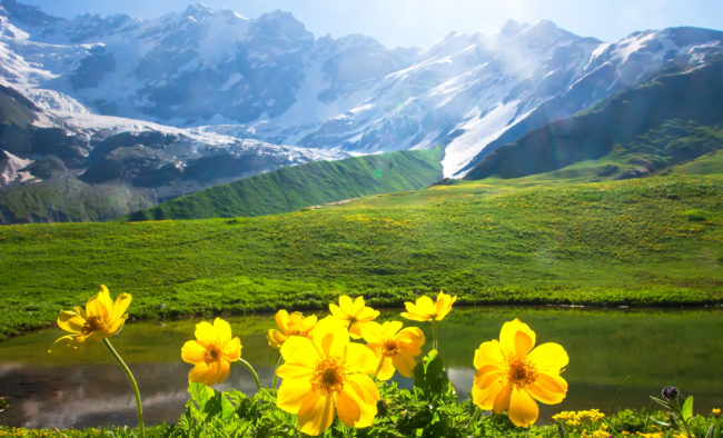 Alpine mountain landscape with yellow flowers on foreground on sunny bright day