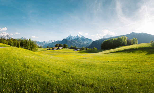Idyllic mountain scenery in the Alps with lush blooming meadows in springtime